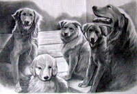 sample pencil sketch, pencil drawing - 94